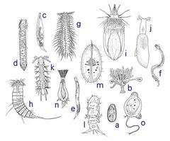 様々な間隙性動物(伊藤1985より改変引用)