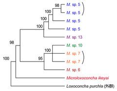 DNA塩基配列による系統推定