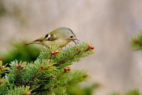 a87.小さな鳥の食事風景.jpg